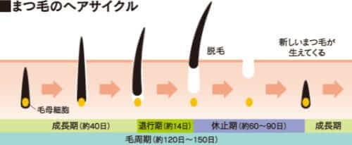 まつげの毛周期